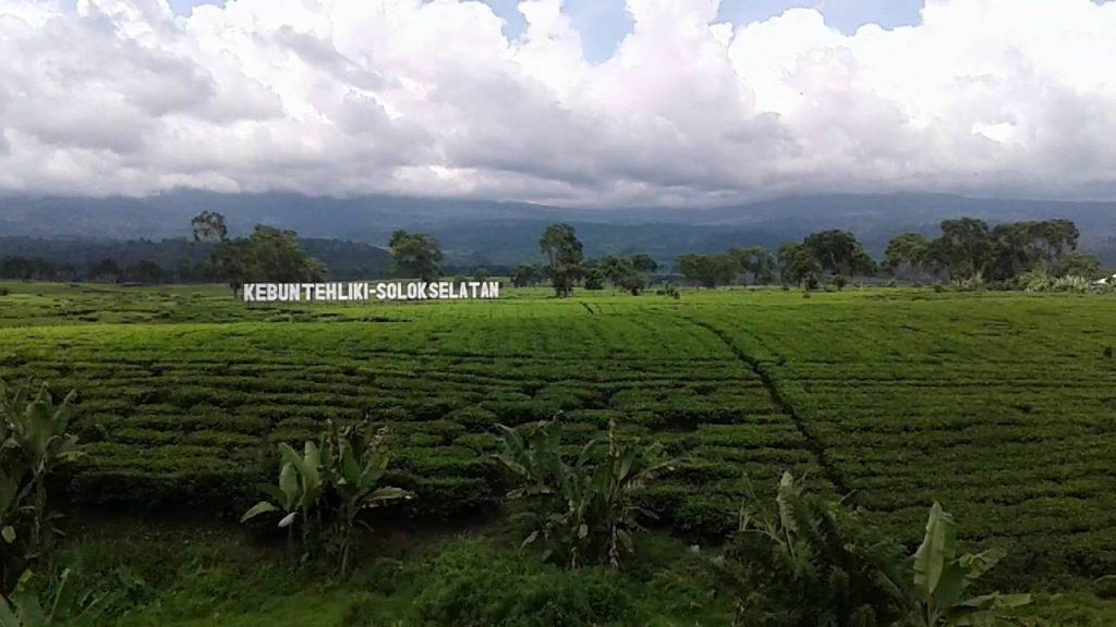 kebun teh liki solok selatan